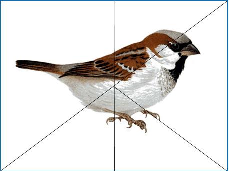 Собрать из частей птиц синица